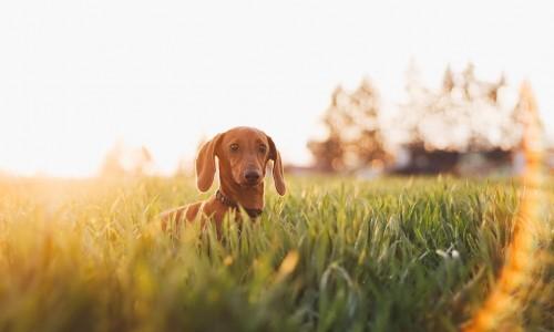 5 φοβεροί τρόποι που ο σκύλος σας μπορεί να τονώσει την ψυχοσωματική σας ευεξία